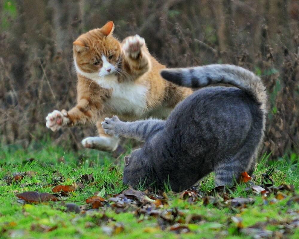 Чем лечить кота после драки