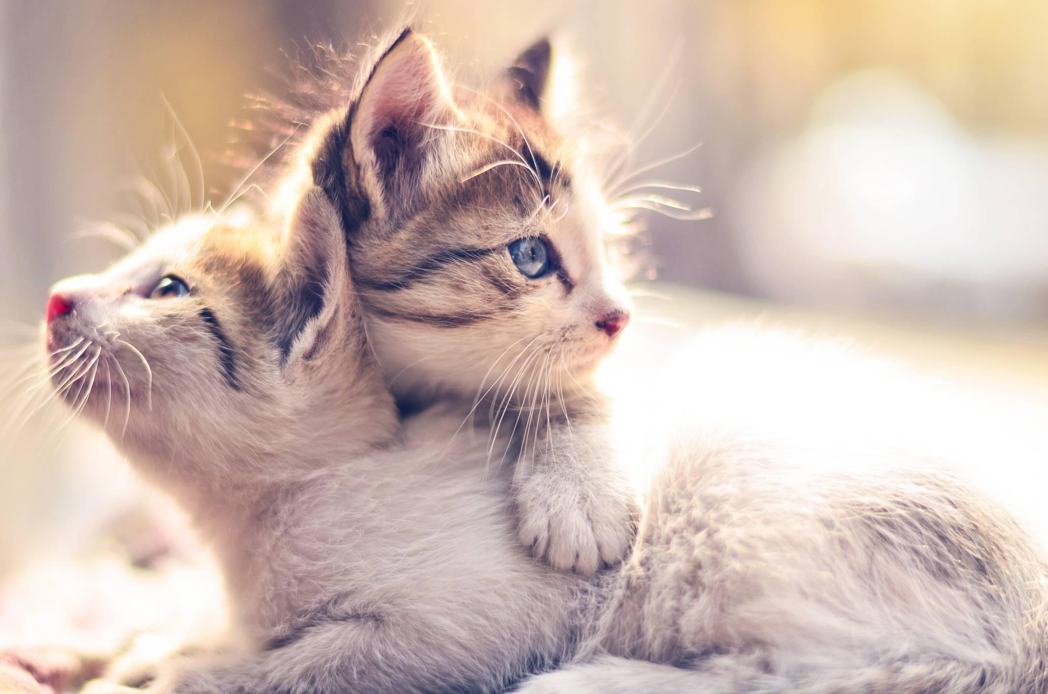 19 причин, почему каждому нужен свой кот