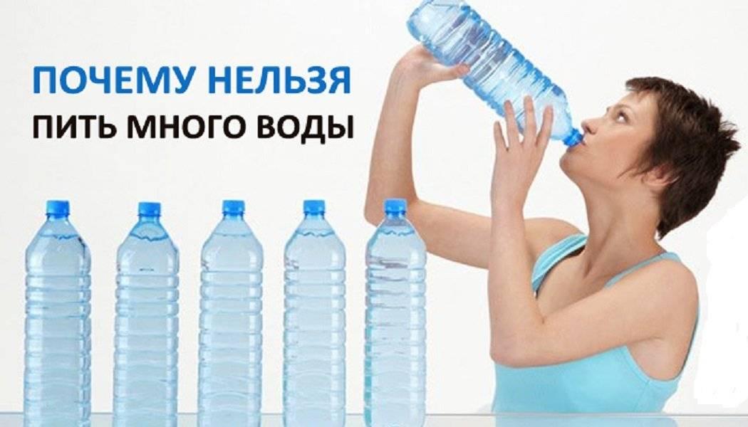 """Кот много пьет воды: причины, что делать   блог ветклиники """"беланта"""""""