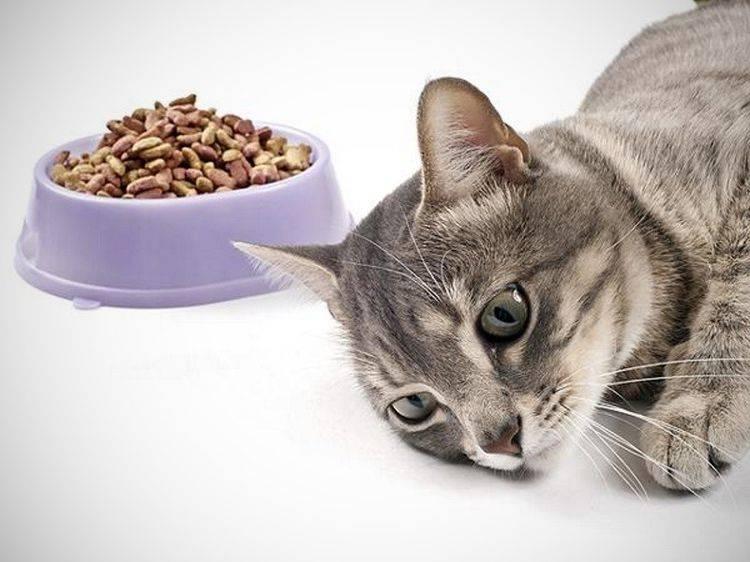 Как отучить кошку от сухого корма: лучшие методы при смене рациона