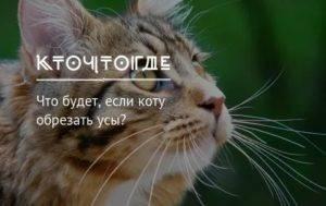 Зачем коту усы, и что будет, если их обрезать - досуг - животные на joinfo.com