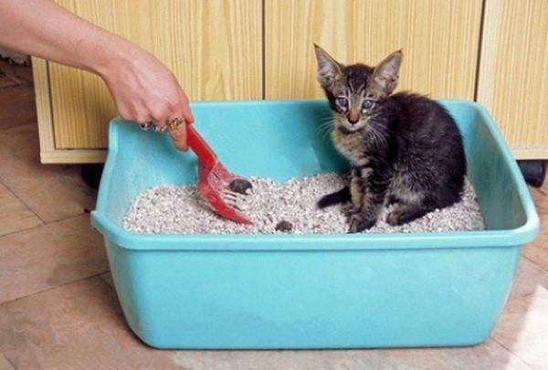 Что делать, если кот перестал ходить в лоток?