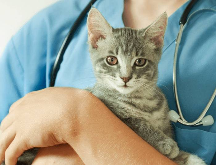 Необходимо ли проводить стерилизацию кошки и что произойдет если это не делать