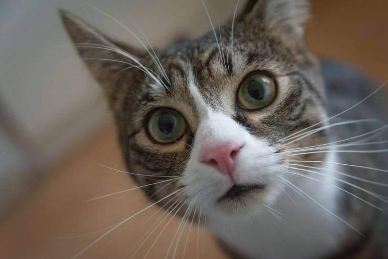 Внутреннее кровотечение у кошек