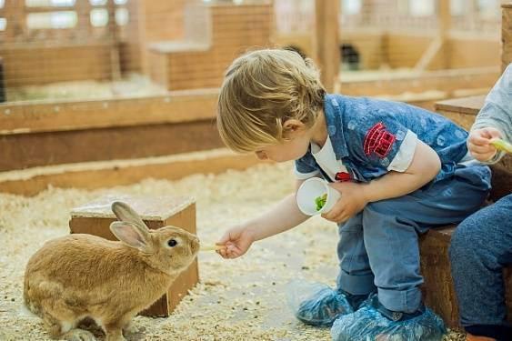 Анималотерапия: что это, что такое пет-терапия, в чем заключается лечение животными, польза для детей