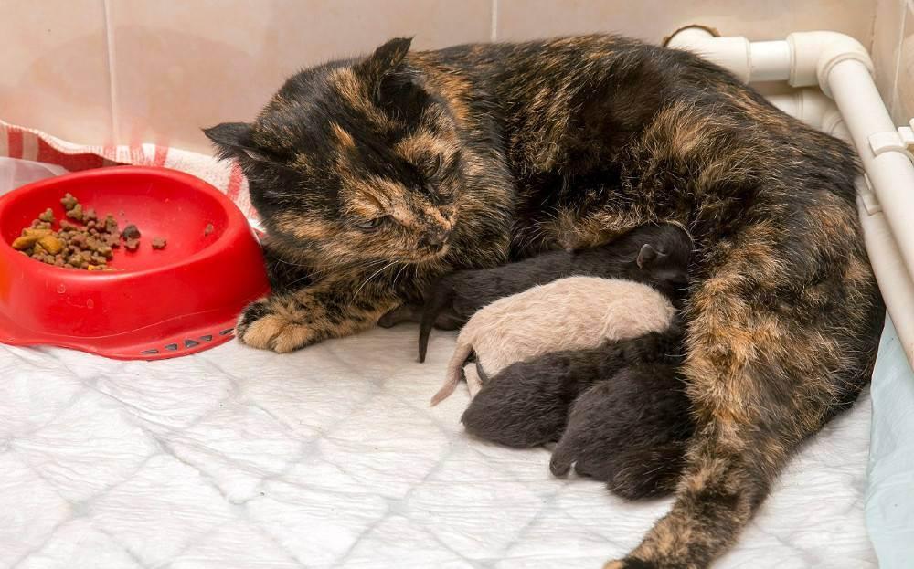 Как рожают кошки: через сколько и сколько длятся роды