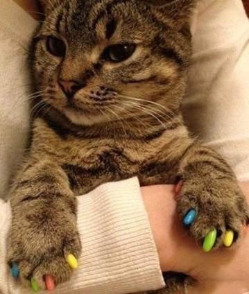 Накладки для когтей для кошек
