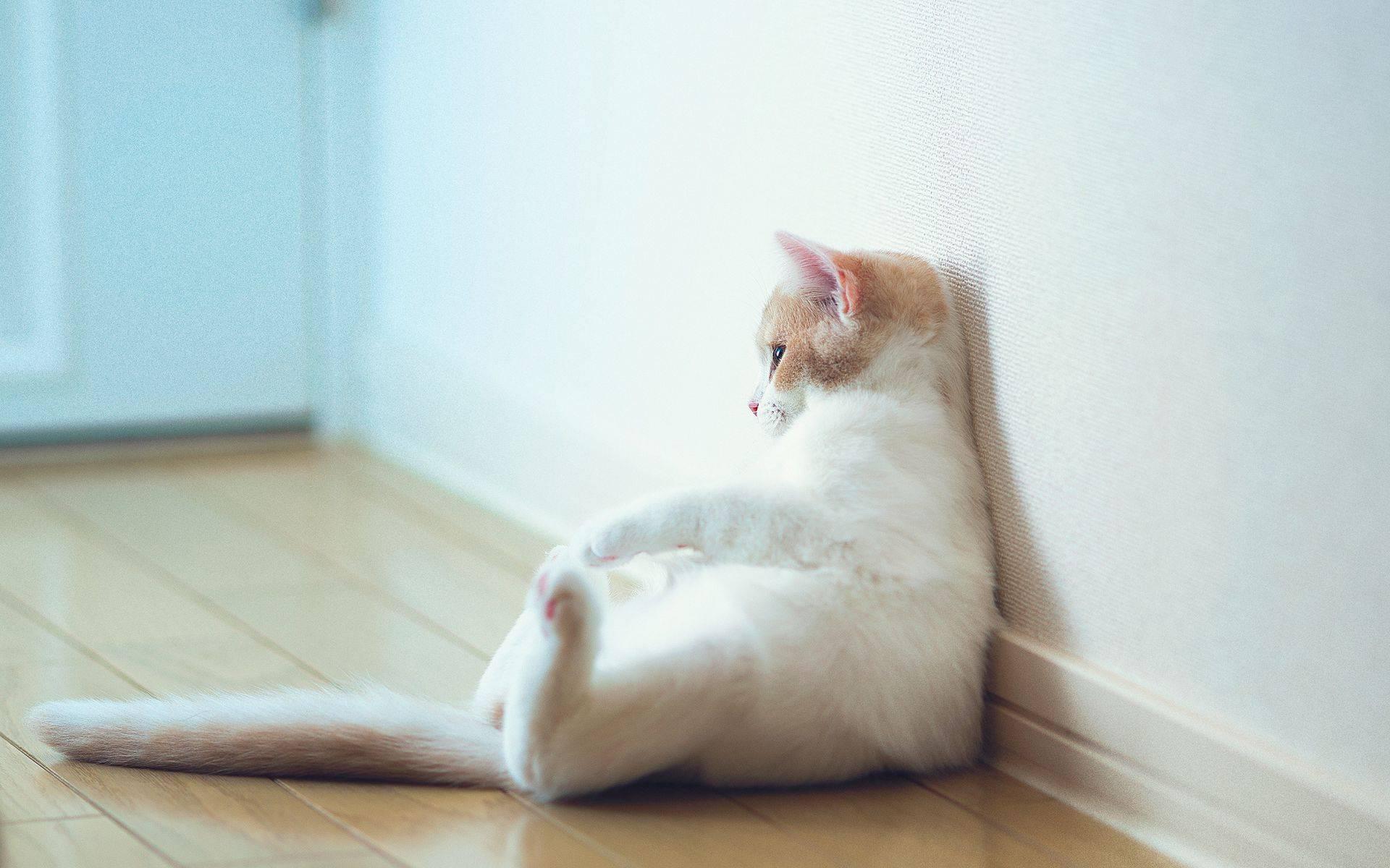 Почему кошка смотрит в стену? причины почему ваш питомец упирается головой в стену если собака упирается головой в стену