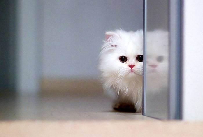 Добрая ли примета подобрать котёнка или найти бездомную кошку, стоит ли приютить найденыша и взять домой с улицы добрая ли примета подобрать котёнка или найти бездомную кошку, стоит ли приютить найденыша и взять домой с улицы