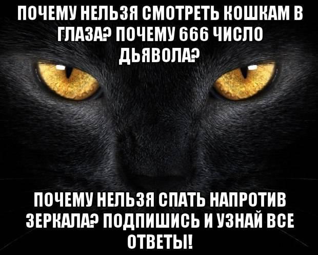 Почему нельзя смотреть кошке в глаза: толкование различных примет, существует ли реальная опасность