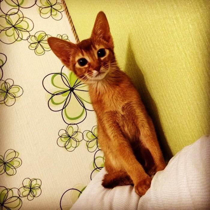Почему дрожит кот | мои домашние питомцы