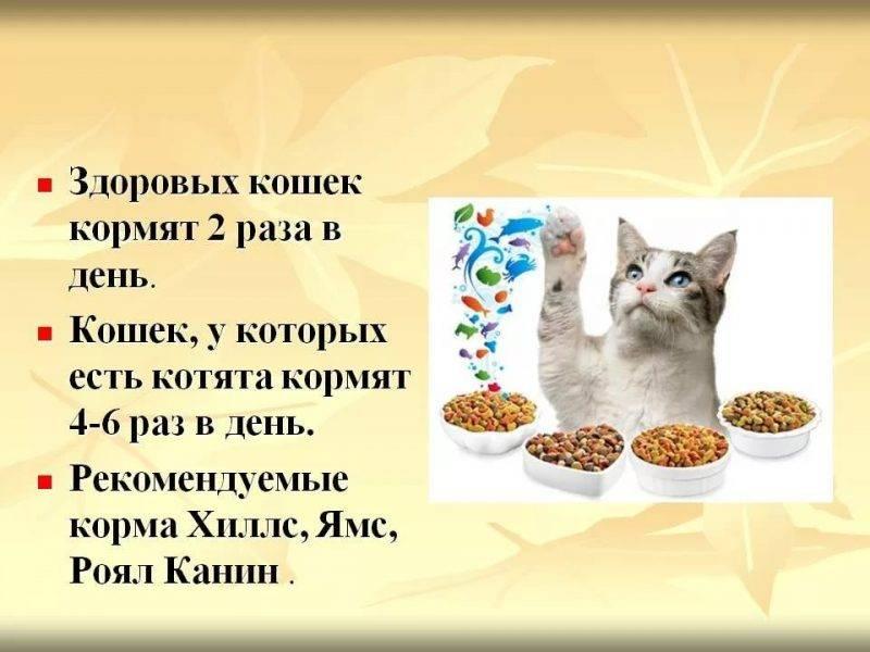 Можно ли давать вместе или чередовать сухой корм и мясо для кошек?