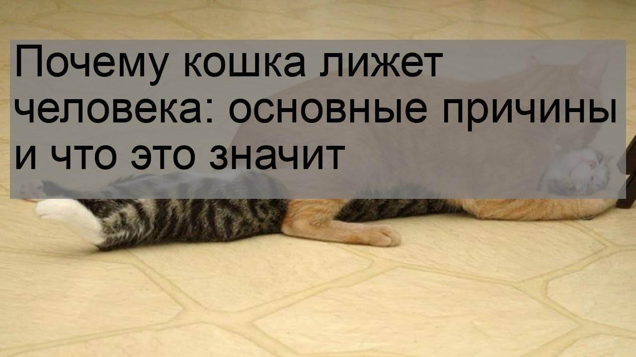 Почему кот сосёт лапу?