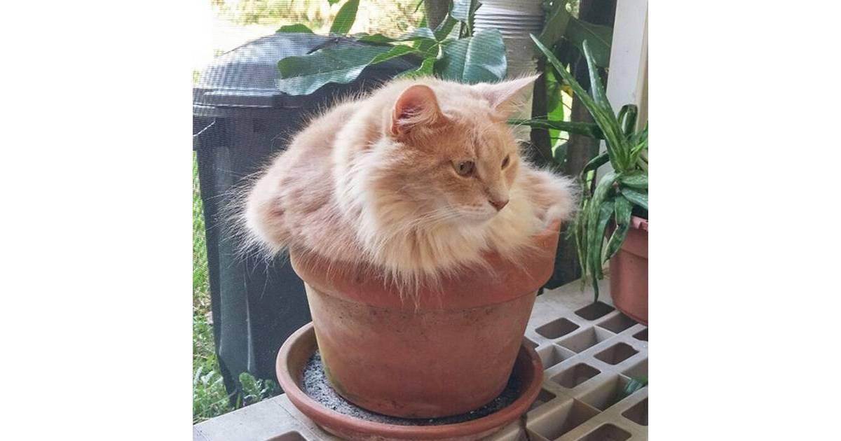 Почему кошка может есть землю