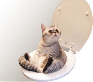 Какой наполнитель лучше для котят?
