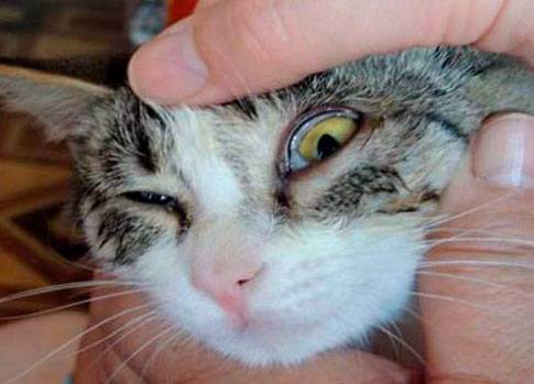 Эффективные методы выведения глистов у кошек в домашних условиях