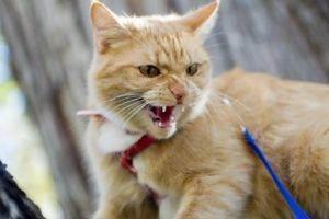 Основные признаки и симптомы бешенства у кошек