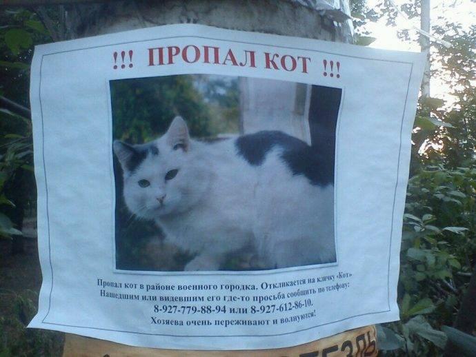 Почему коты уходят умирать из дома. 8 возможных признаков смерти