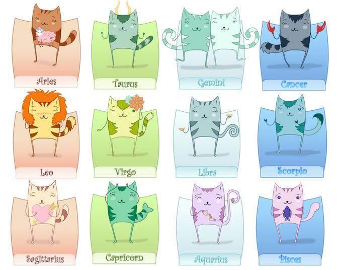 Скорпион — гороскоп для кошек