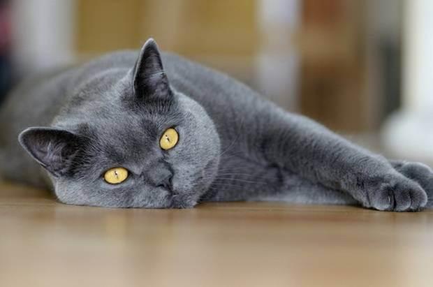 Потребности кошек в питательных веществах и энергии - роль микроэлементов в кормлении кошек