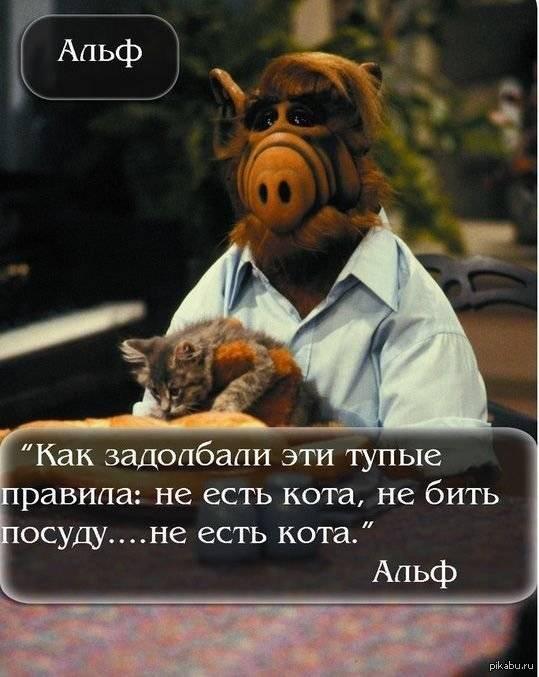 Миски для кота какие у вас? - запись пользователя виктория (vikamsk) в сообществе домашние животные в категории помогите советом - babyblog.ru