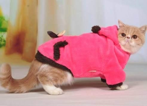 Можно ли вислоухую кошку скрещивать с вислоухим котом: почему нельзя?