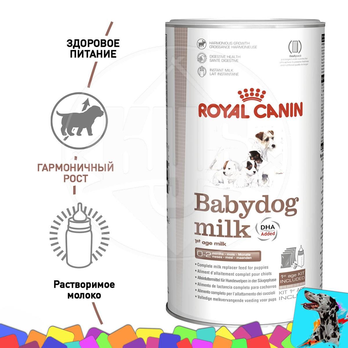 Замена кошачьего молока: особенности альтернативного кормления