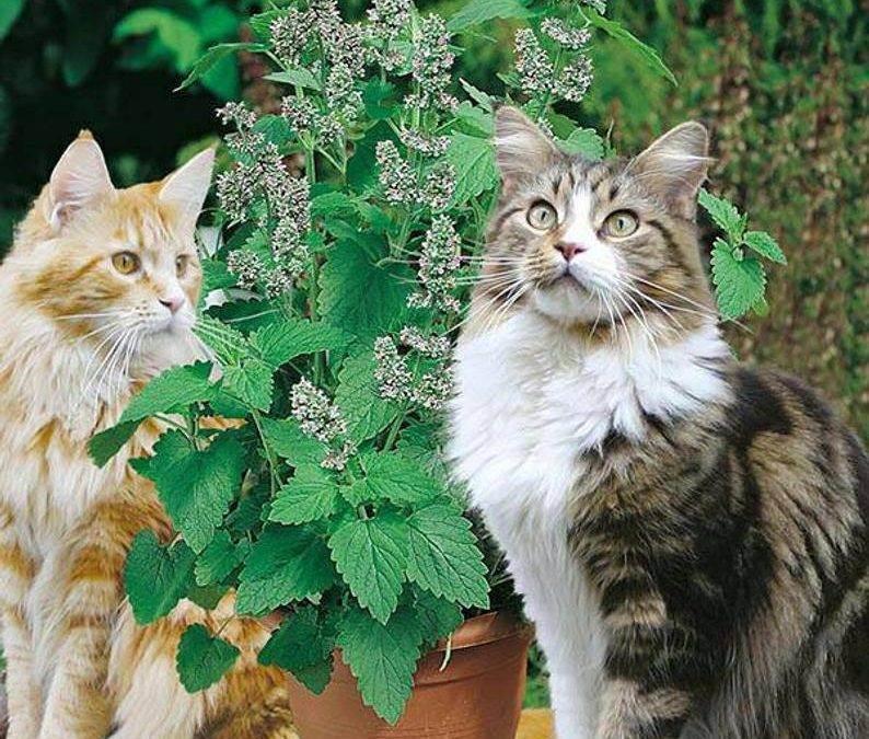 Целебная сила кошки - в ее окрасе