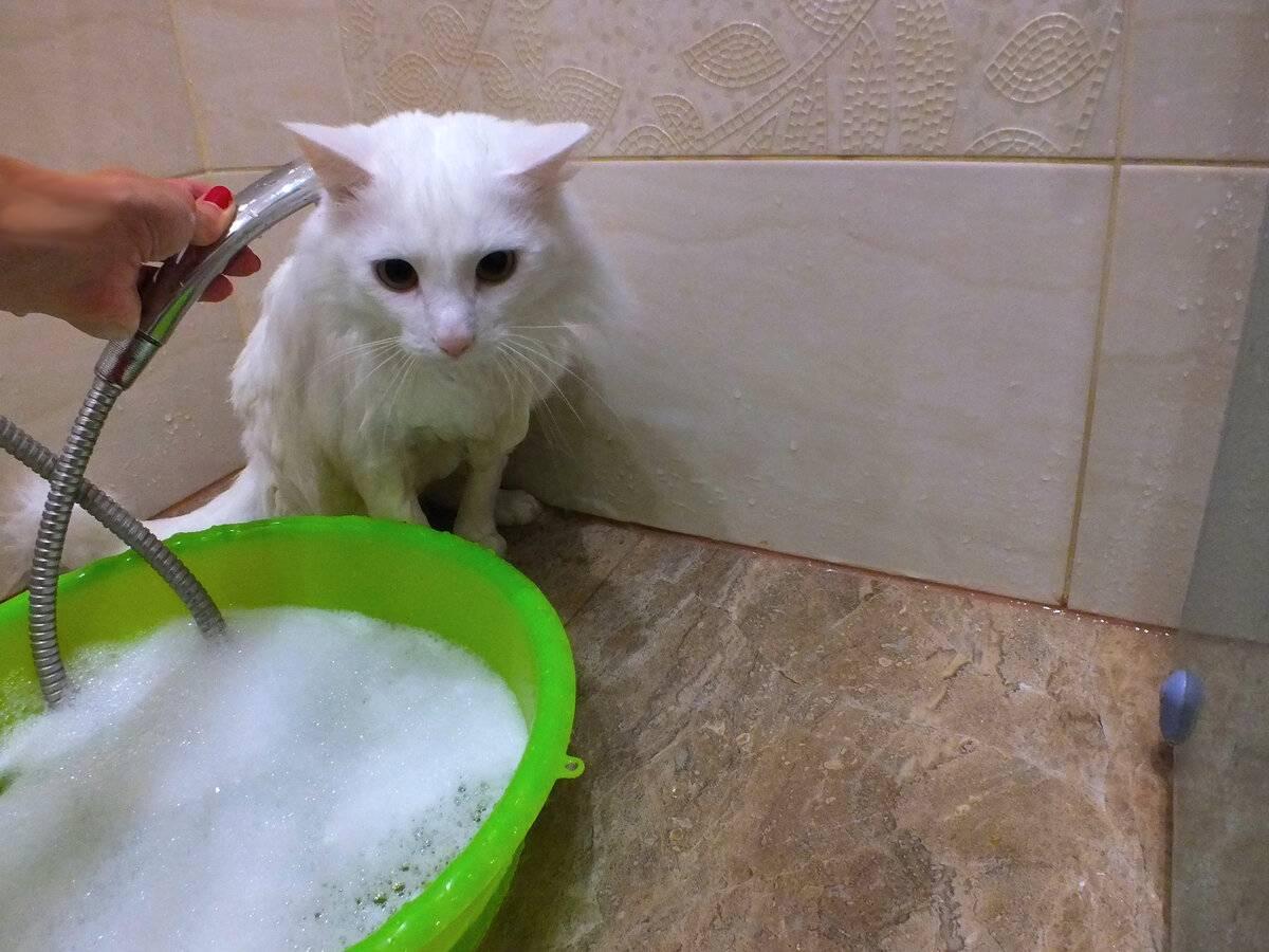 Можно ли мыть кота хоз мылом