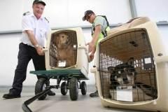 Делимся опытом: перевозка собаки в самолете, это большая проблема