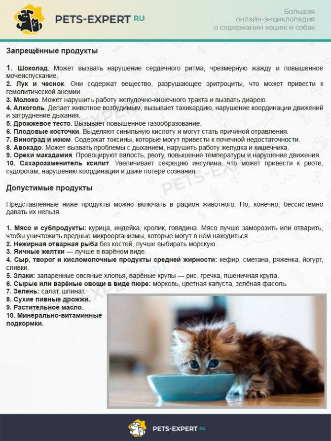 Кошка много пьет воды