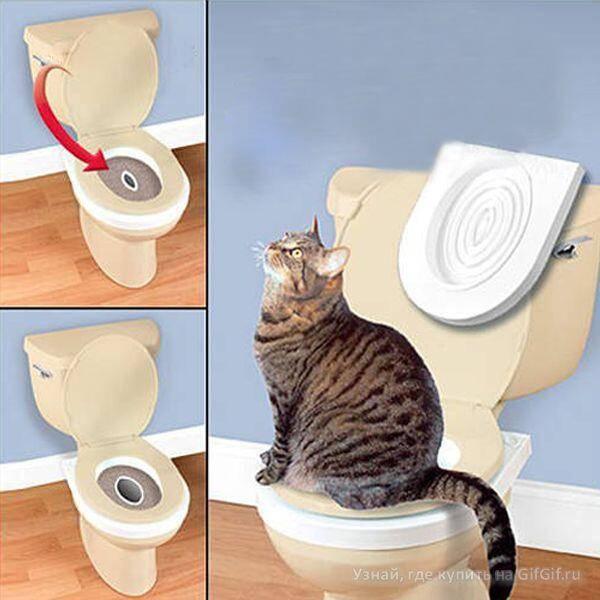 Как приучить кота или кошку к шлейке: лучшие способы как приучить кота или кошку к шлейке: лучшие способы