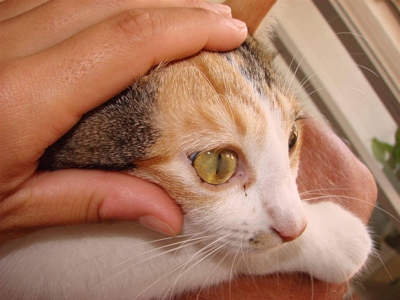 У котенка гноятся глаза: причины и лечение в домашних условиях