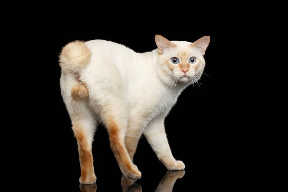 Самые игривые породы кошек топ 10