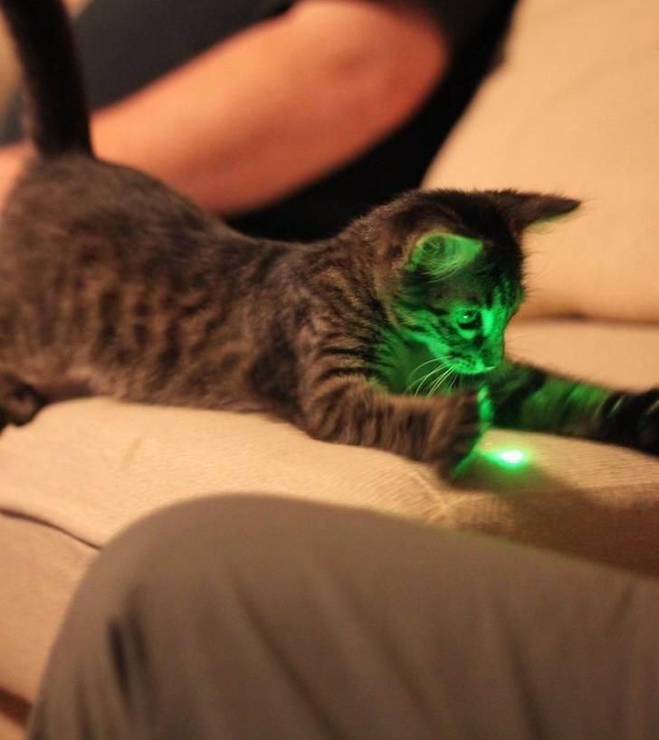 Почему вы должны играть с кошкой?