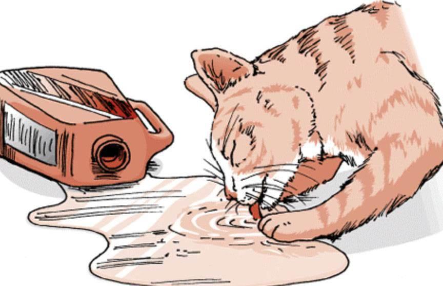 Что делать если кошка отравилась - симптомы и признаки отравления, лечение в домашних условиях, что дать и чем кормить, читаем в статье на сайте лапы и хвост