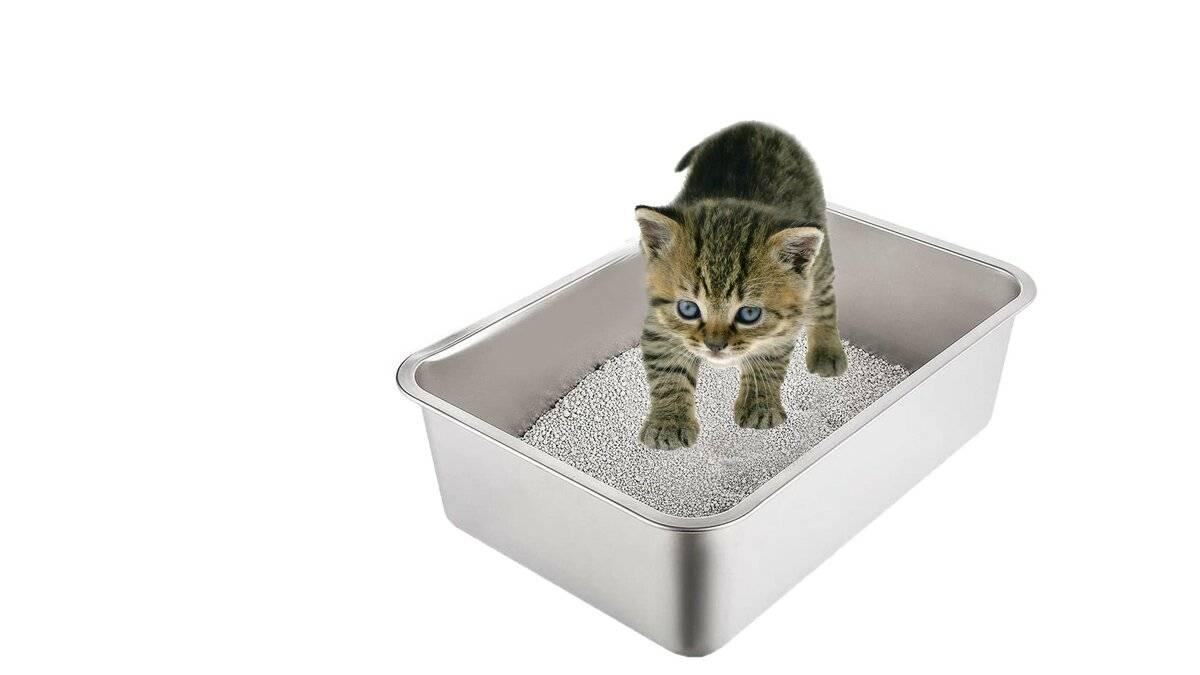 Способы быстрого приучения котенка к лотку