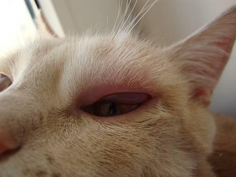 Что может означать наличие шишки на шее у кошки, похожей на шарик