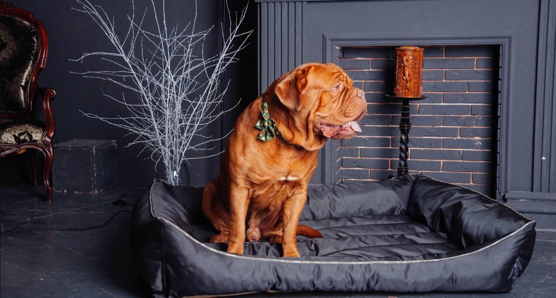Как показать собаке, что ты главный: прививаем правила и навыки