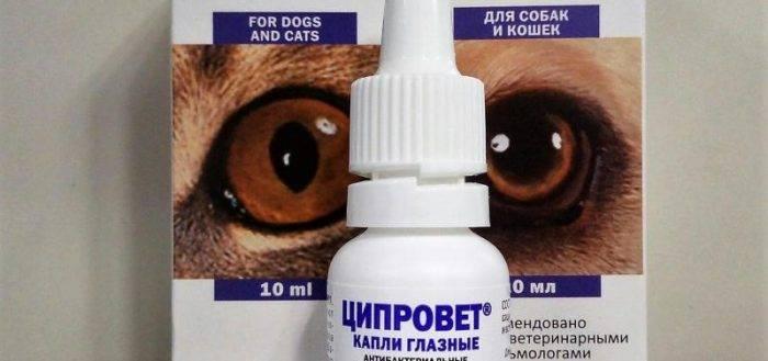 Инструкция по применению таблеток ципровета в ветеринарной медицине. рассчитайте оптимальную дозу ветеринарного препарата. изучите широту антибактериального эффекта ципровета для животных в таблетированном виде