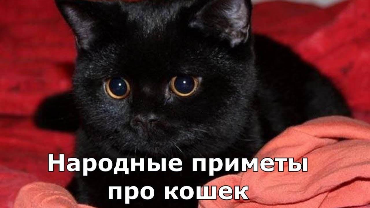 Почему кошка лижет руки и лицо человека