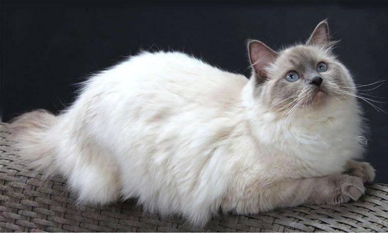 Самые милые породы кошек: топ 25 пород