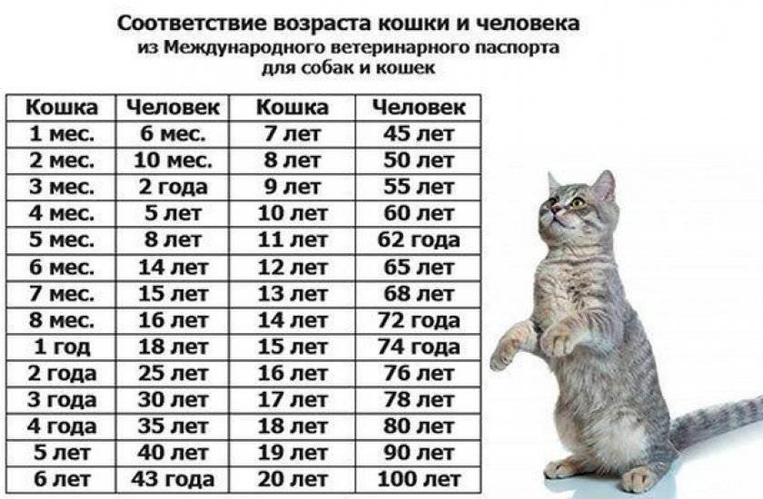 Сколько живут кошки в домашних условиях и как продлить жизнь любимому питомцу?