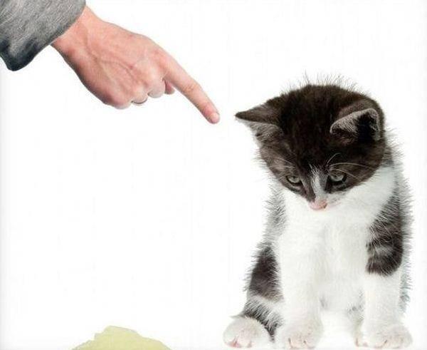 Как правильно воспитать послушного и ручного котенка