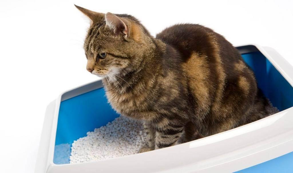Где поставить лоток для кошки?
