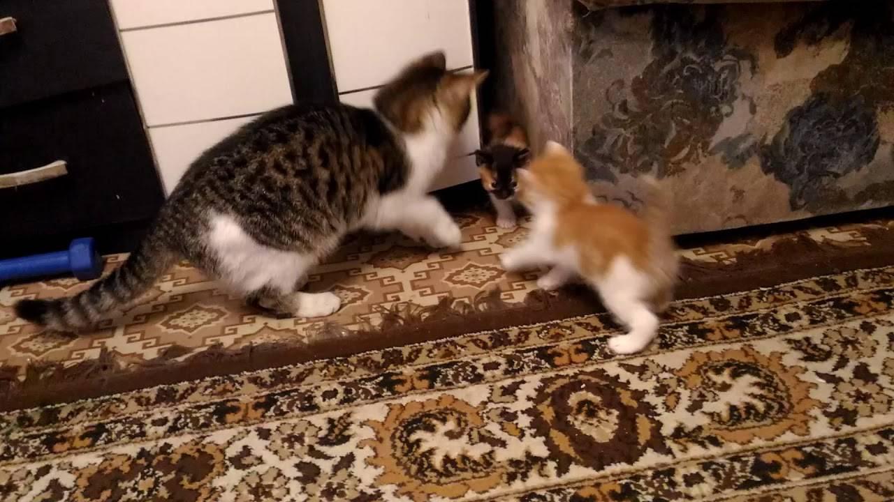Как ухаживать за котенком до полугода в домашних условиях