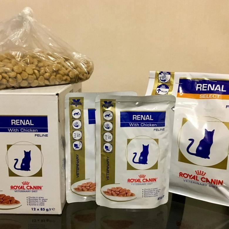 Чем необходимо кормить кота при почечной недостаточности