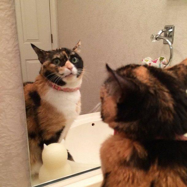 Почему не рекомендуется показывать кошке зеркало