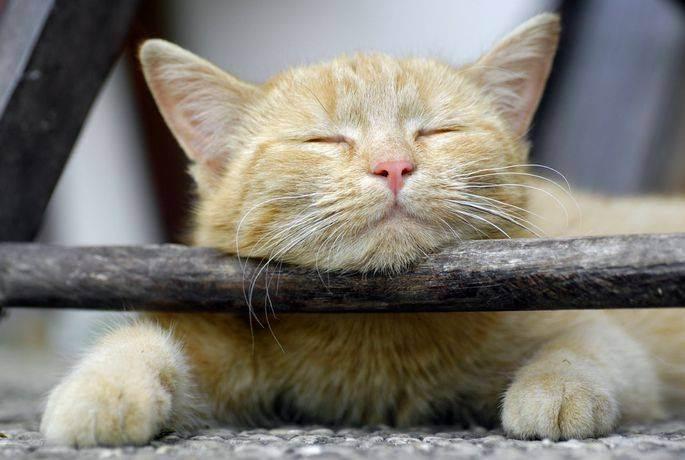 Для котов глистогонное