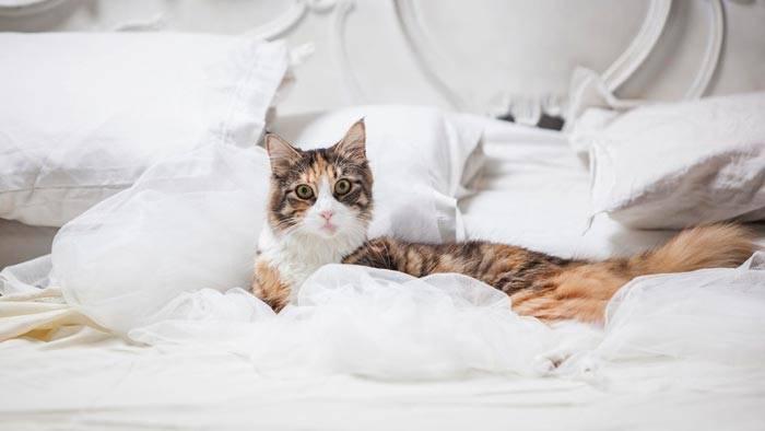 Как наказать кота чтобы он понял?